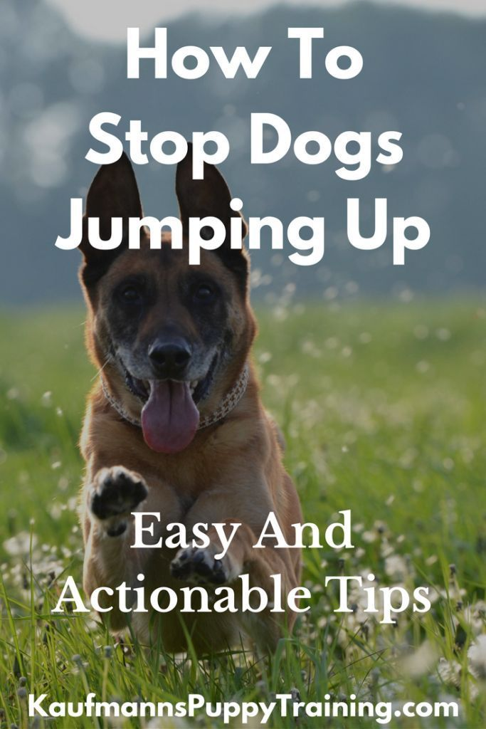 How To Stop Dogs Jumping Up Easy And Actionable Tips When Your