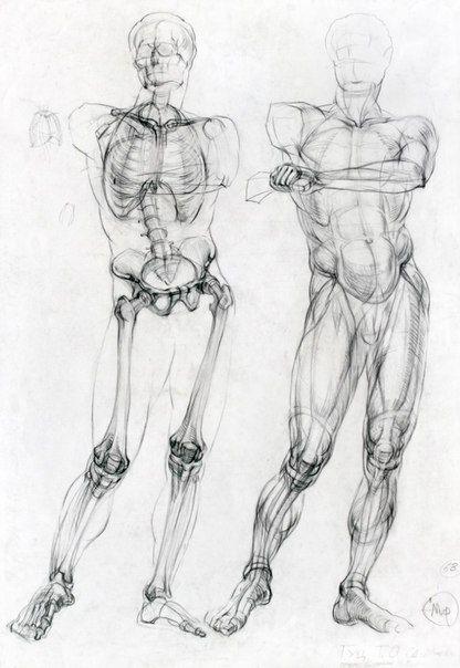 Pin by Sobi Nightmare on Academic drawing | Pinterest | Anatomy ...