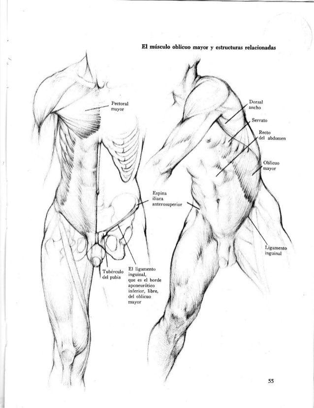 Anatomia-artistica-dibujo-anatomico-de-la-figura-humana | Arte ...