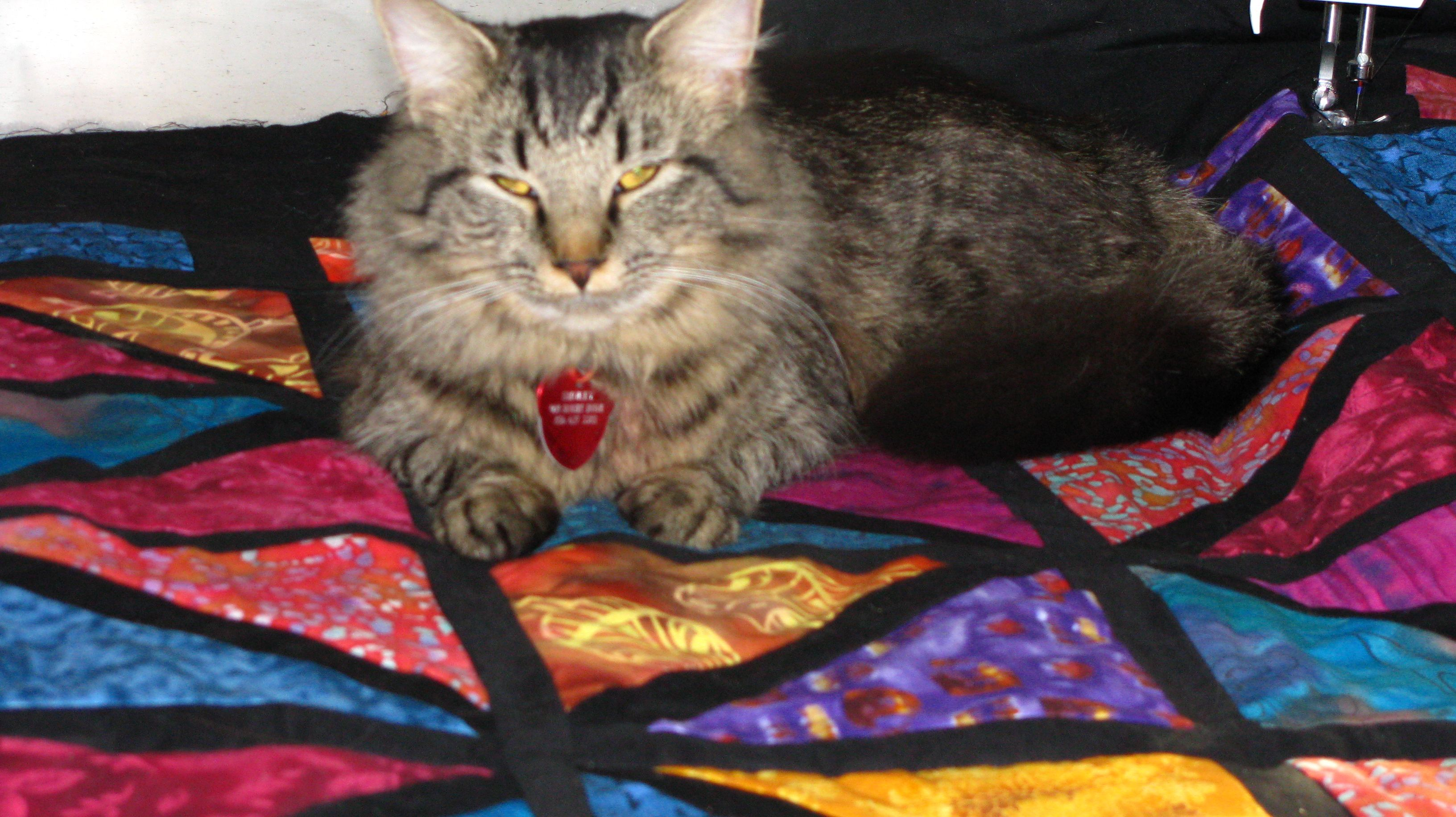 Our cat Smokey loves my quilts