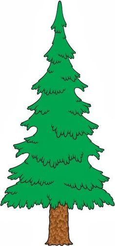 evergreen tree drawings yahoo image search results trees rh pinterest com