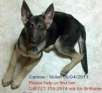 Deployed Marine S Wife Desperate To Find Cammie Dog Stolen From