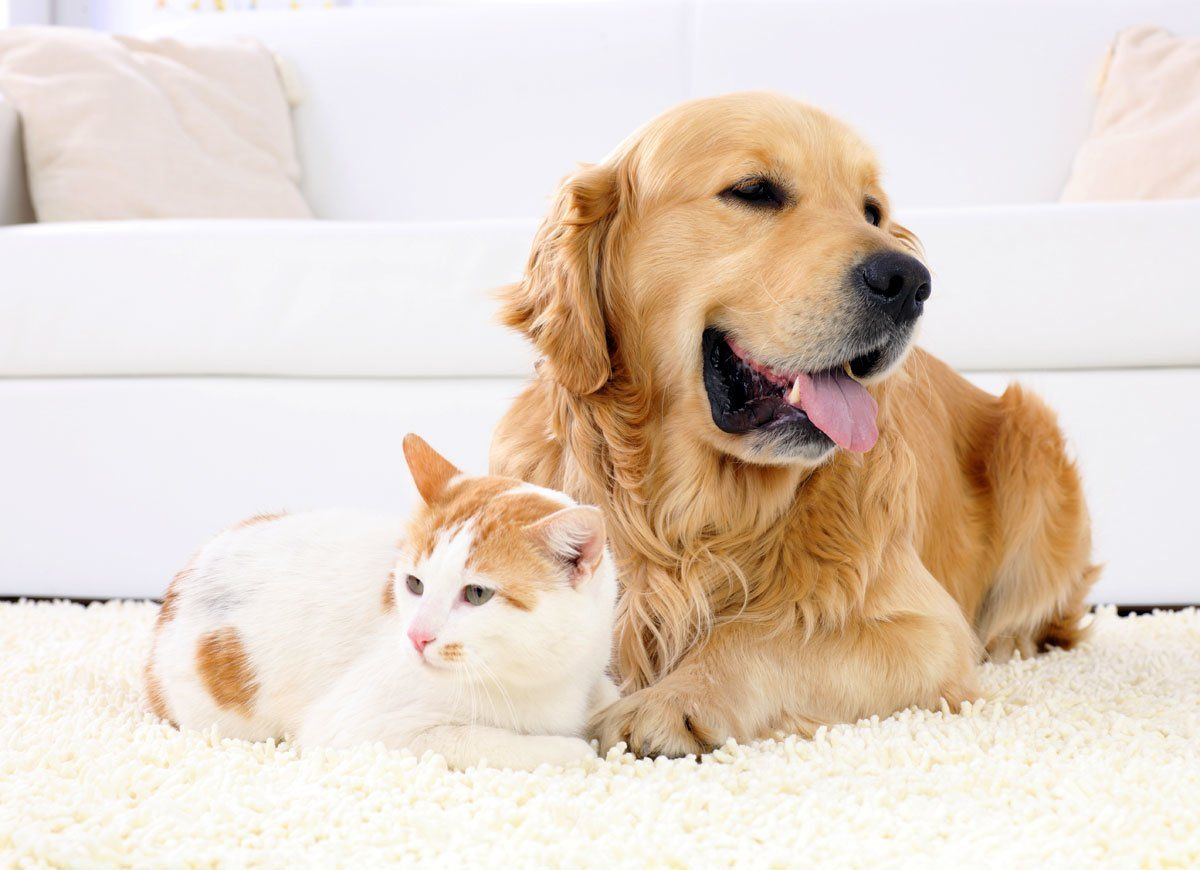 How To Remove Pet Hair From Absolutely Everything Pet Hair