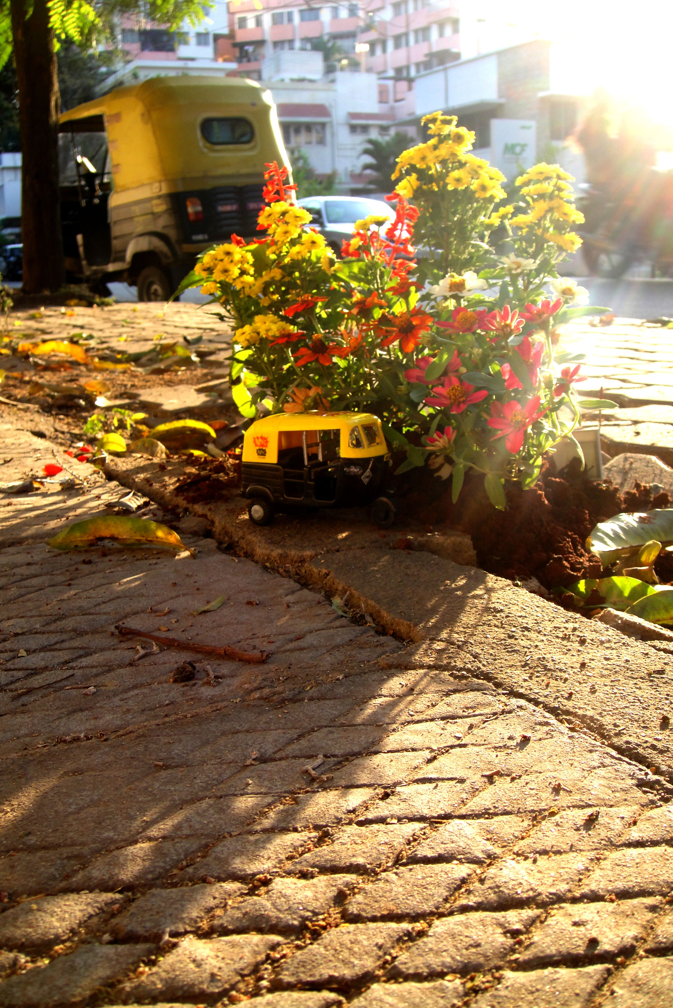 guerrilla pothole gardening - steve wheen | Art makes the world go ...