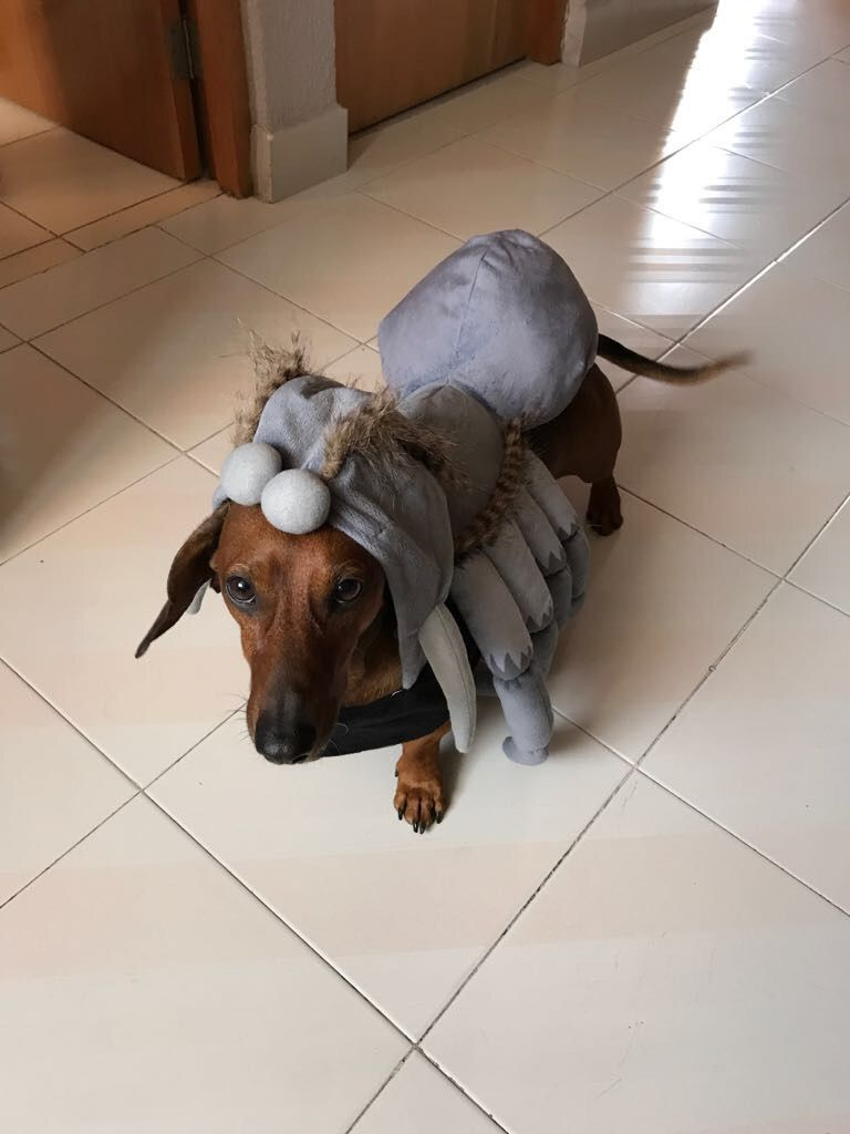 dachshund costume - is this from star wars? | dachshund costumes