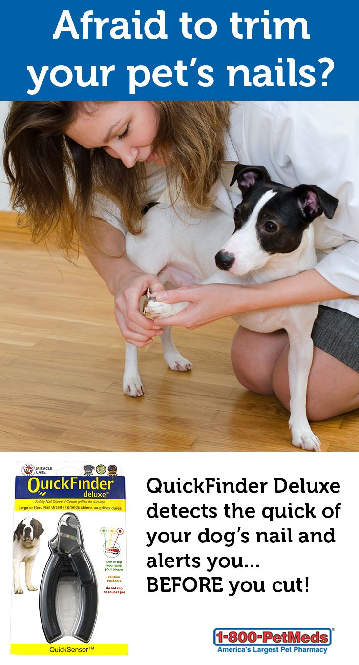 Quickfinder Deluxe Safety Nail Clipper 1800petmeds Category Uuid 34affbe739320842c38a5dcfc8 Grooming Tools Pet Medications Your Dog