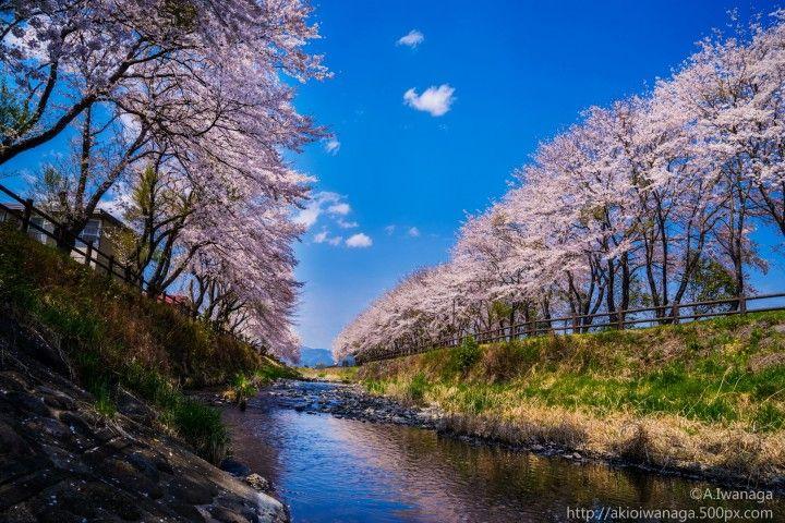 عجائب فصل الربيع صور خلابة لزهور الكرز في اليابان عالم الإبداع Pictures Funny Pictures Waterfall
