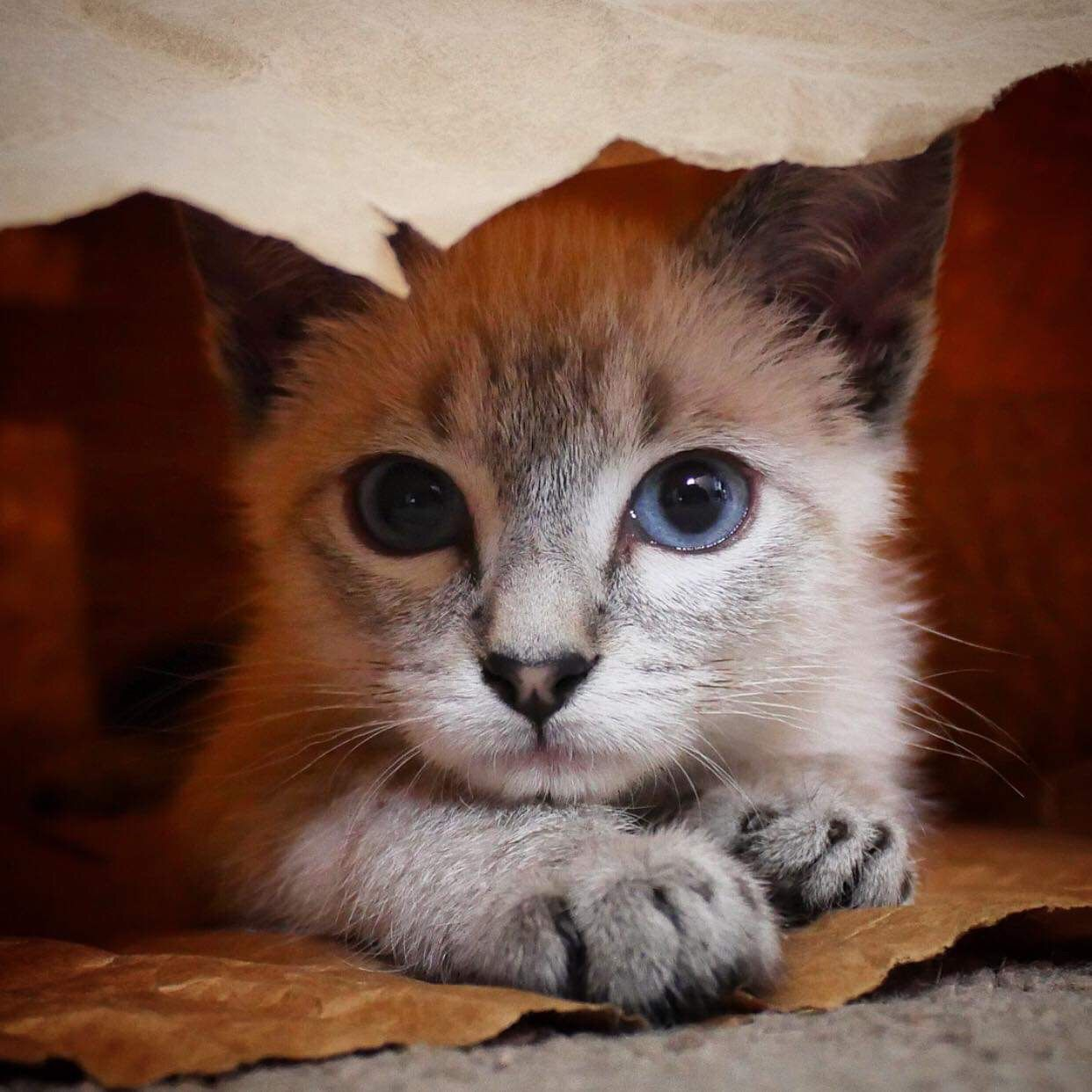 Allerpet Cat Dander Remover 12 Oz Bottle Chewy Com Dog Allergies Cat Allergies Cat Dander