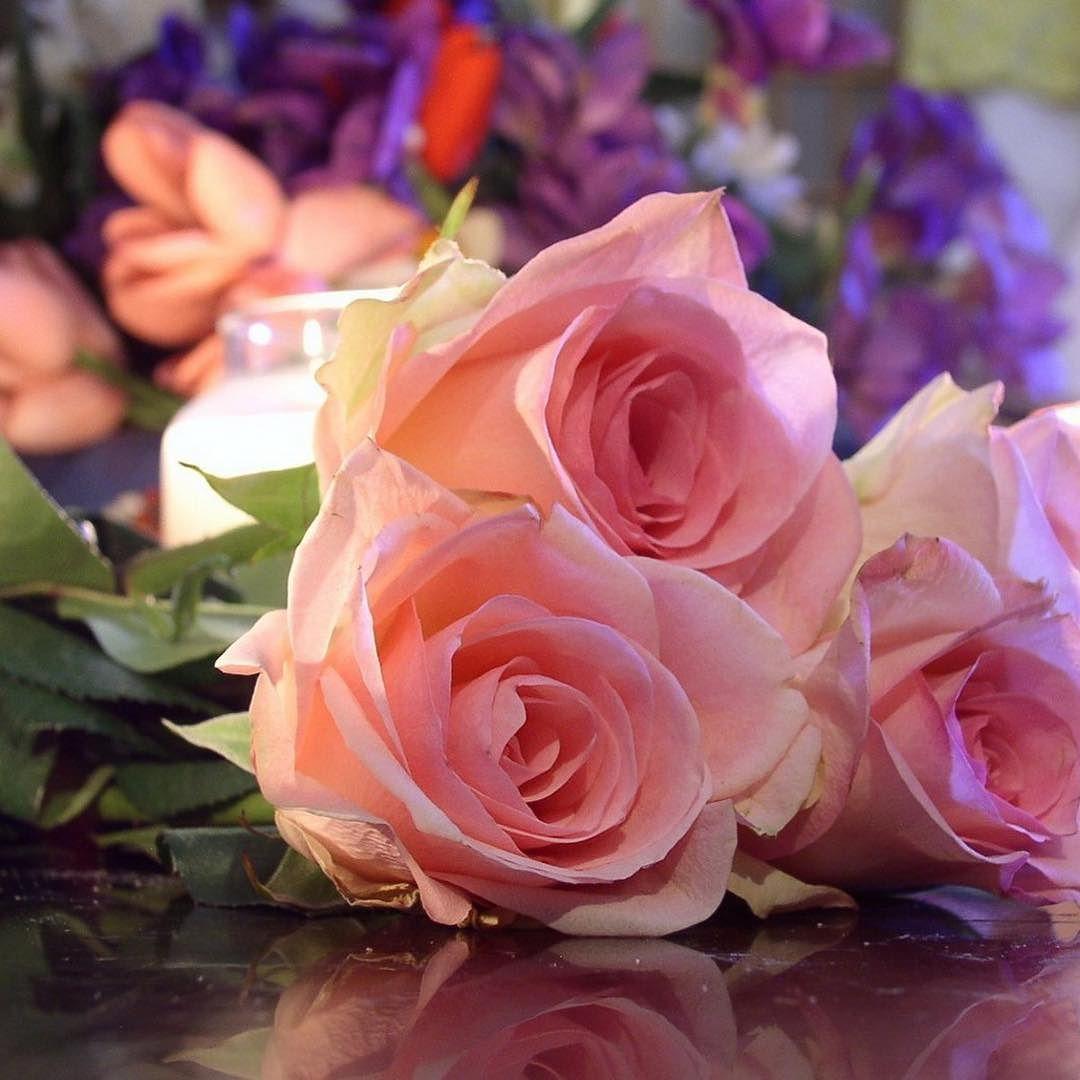 الورد هو رمز الحب والسعادة والفرح والجمال Egflor Rose Flowers Succulents