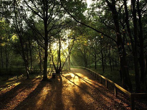 10-exotic-forests-around-the-globe[1]