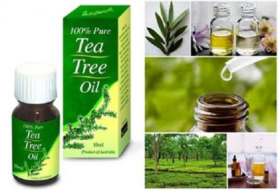 arbore de ceai din varicoză
