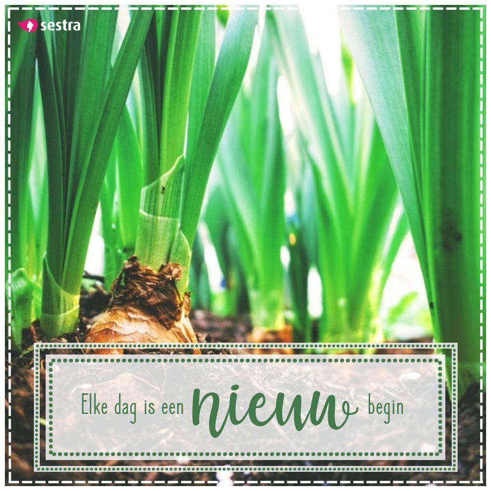 spreuken nieuw begin Elke dag is een nieuw begin. | Sestra | Quotes | Spreuken  spreuken nieuw begin