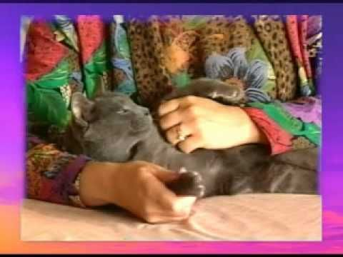 SOOTHING CAT MASSAGE - YouTube