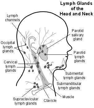 Diagram lymph nodes head auto electrical wiring diagram lymph glands head and neck medical pinterest medical lymph rh pinterest com diagram showing lymph nodes ccuart Image collections