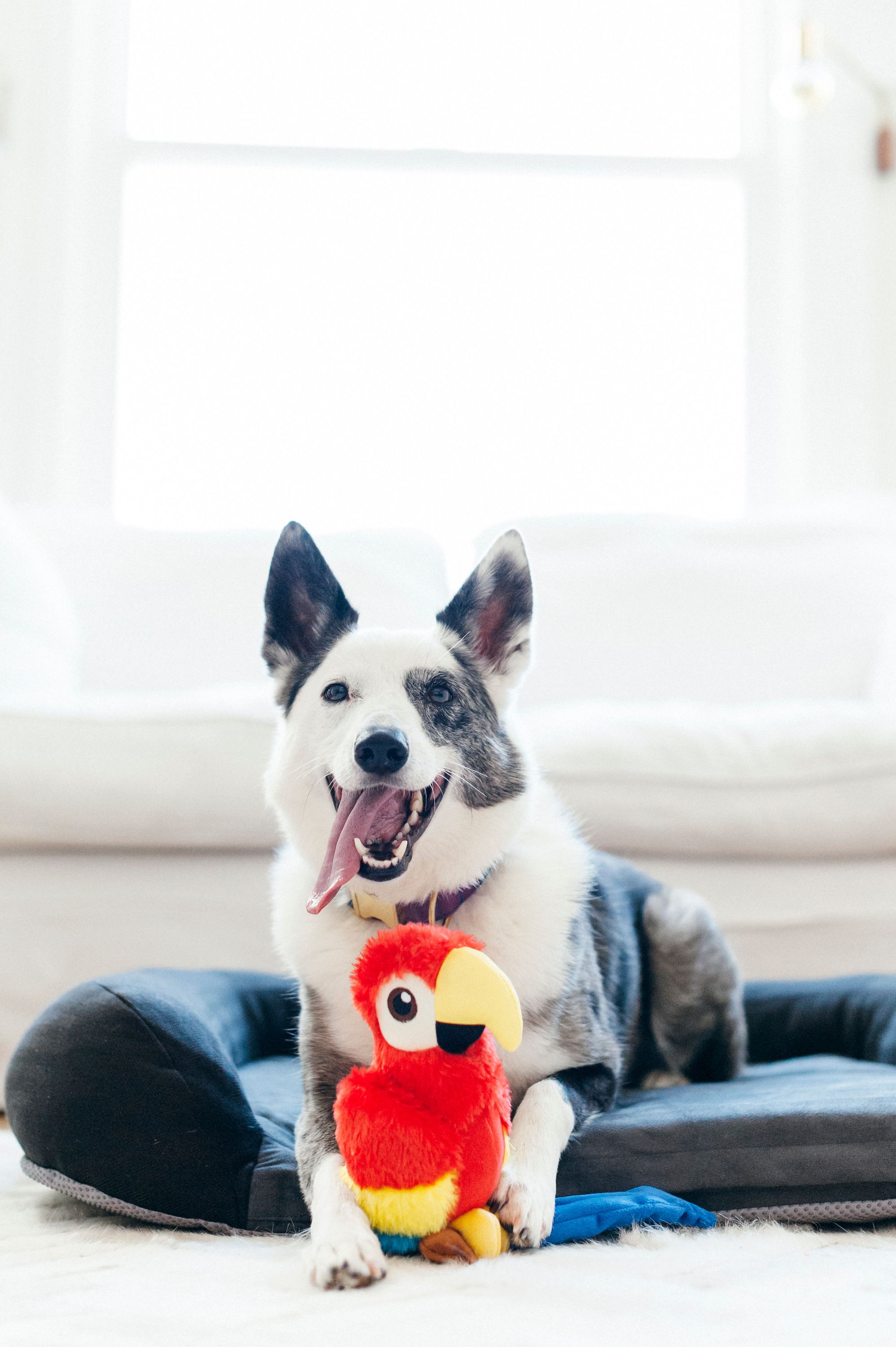 Fetching Flock Plush Toy Collection Best Dog Toys Cool Dog Beds