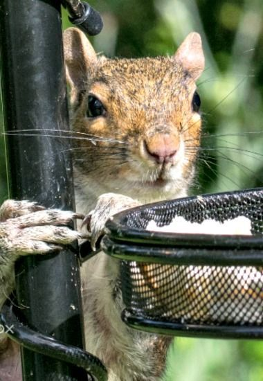 the human put out breadcrumbs ... where are the seeds?  (Feelin' Squirrely group board)