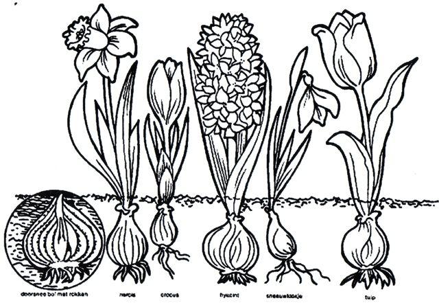 Kleurplaten Bloemen En Planten.Kleurplaat Bloemen Bloem Kleurplaten Lentebloemen En
