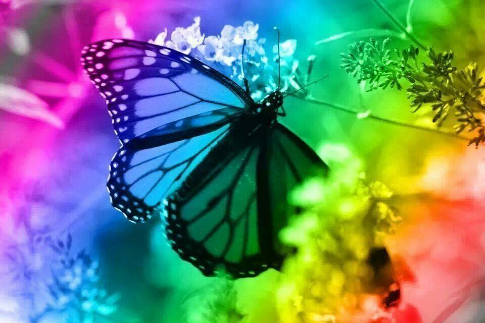 Mariposa | Animales | Pinterest | Mariposas y Animales