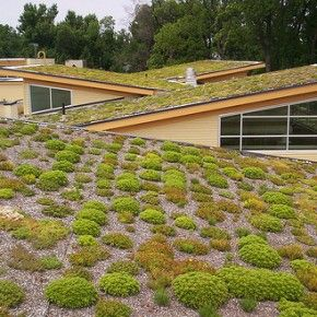 Green Roofs For Multiple Environmental Benefits Green Roof Roof Garden Roof Architecture