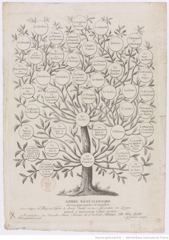 Arbre Genealogique Des Langues Mortes Et Vivantes Dresse