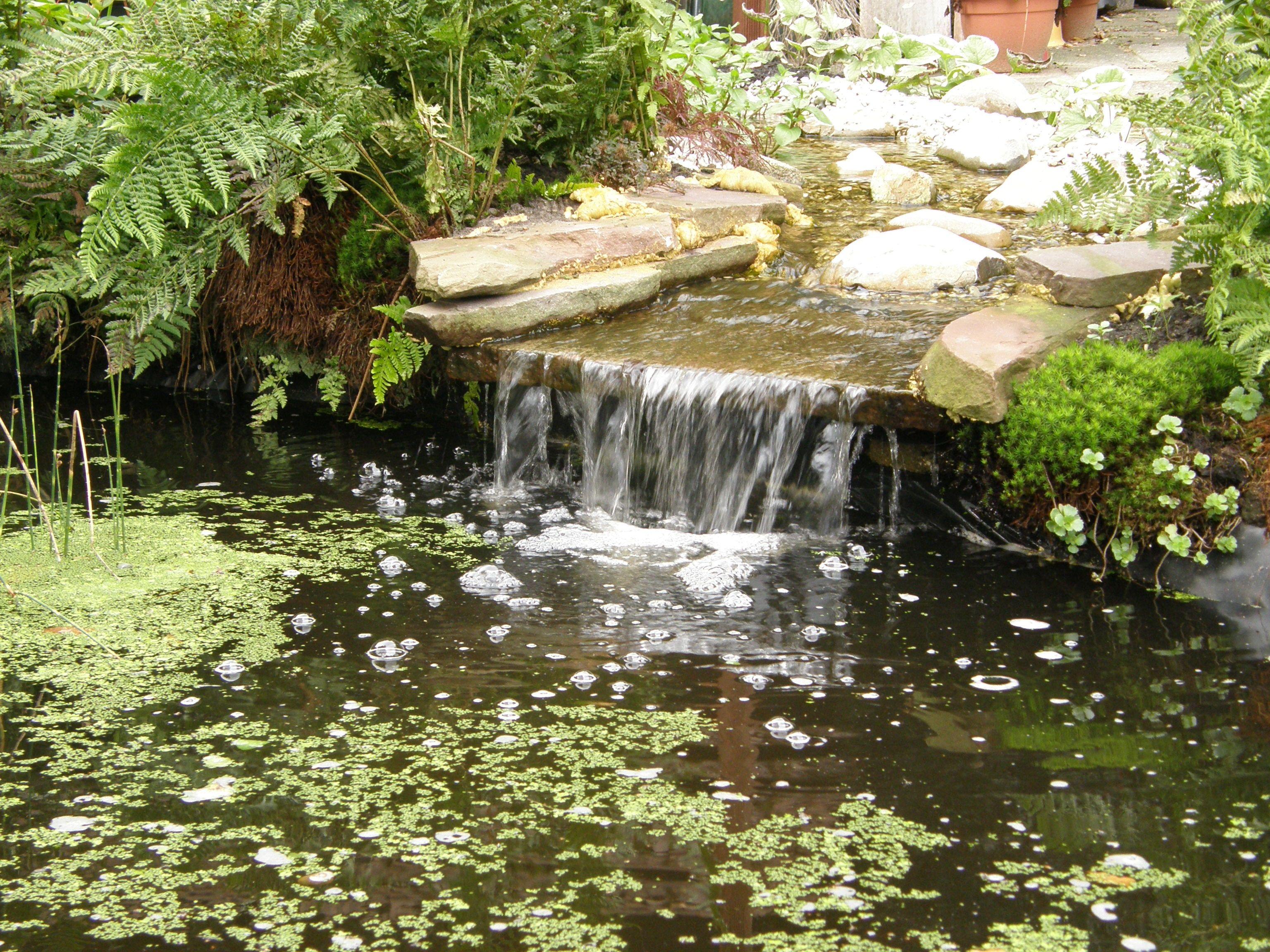 Beekloop 1 trede vijvers pinterest vijvers tuin for Waterval vijver aanleggen