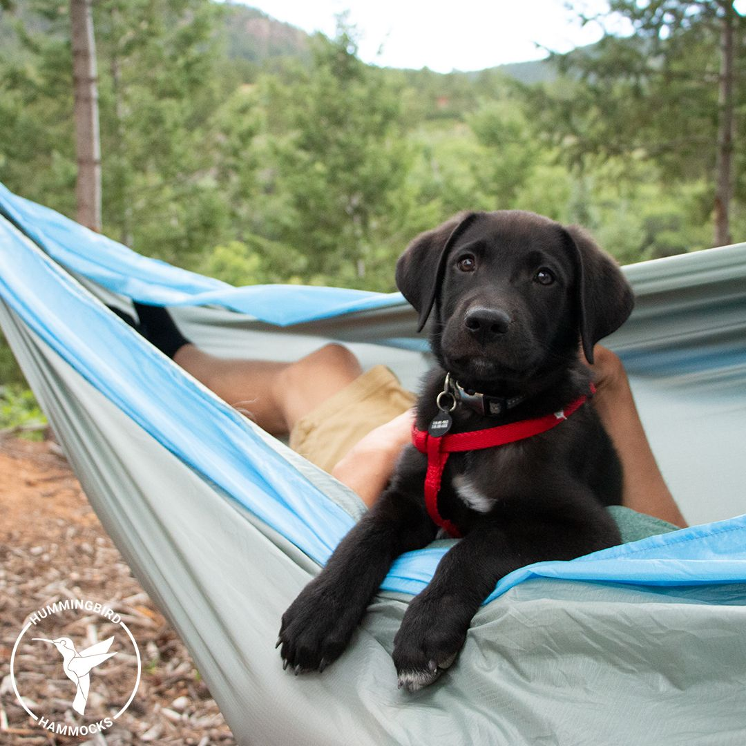 Double Hammock in 2020 (With images) National puppy day