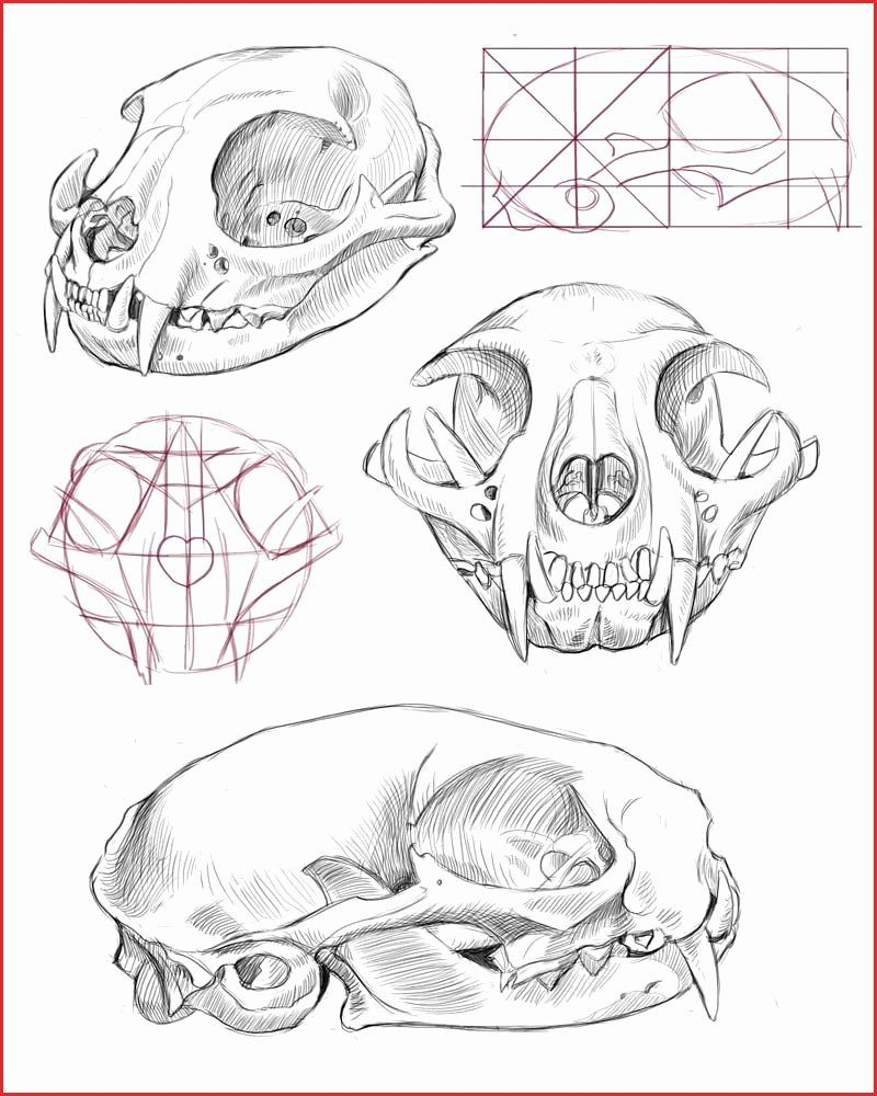 Sugar Skull Owl Coloring Pages in 2020 | Animal skull ...