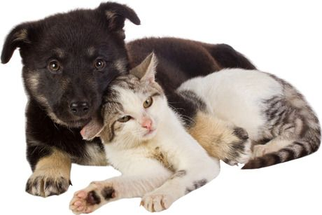 For Valentine S Day 25 Cute Dog And Cat Pictures Cute Cats And