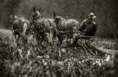 Dan Routh Photography: Mule Team in B&W
