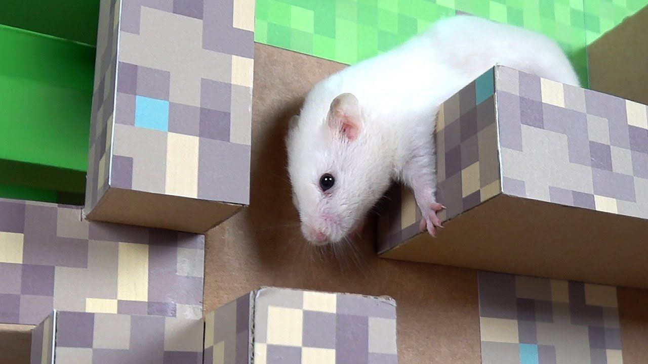 Hamster In Minecraft Cube Maze Hamster Dog Toys Funny Animals