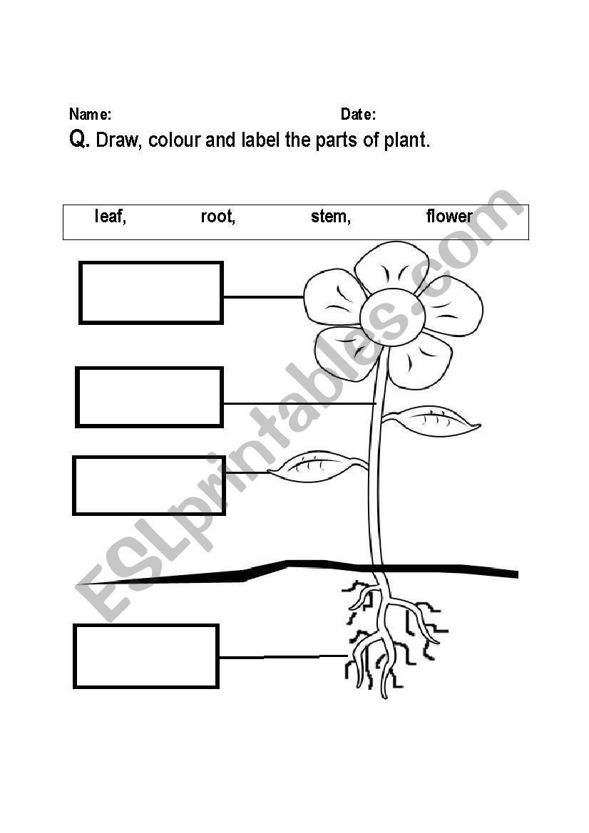 Parts Of A Plant Worksheet Parts Of Plant Labeling Worksheet Esl Worksheet  by Fs...…   Plants worksheets [ 1169 x 826 Pixel ]
