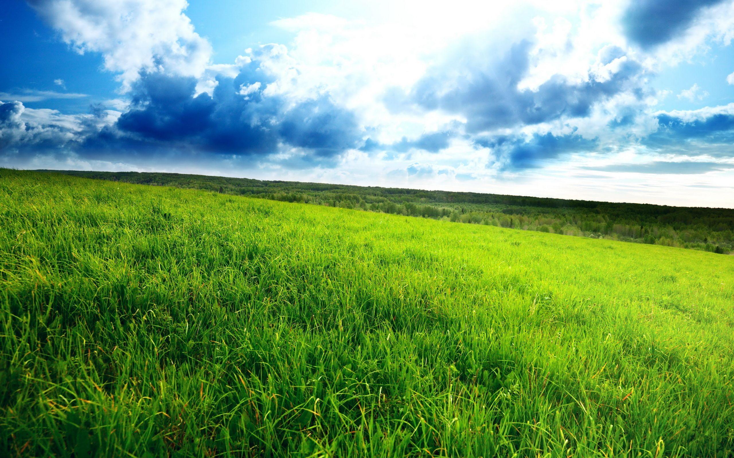 Nature_Fields_Green_field_029973_.jpg (2560×1600)