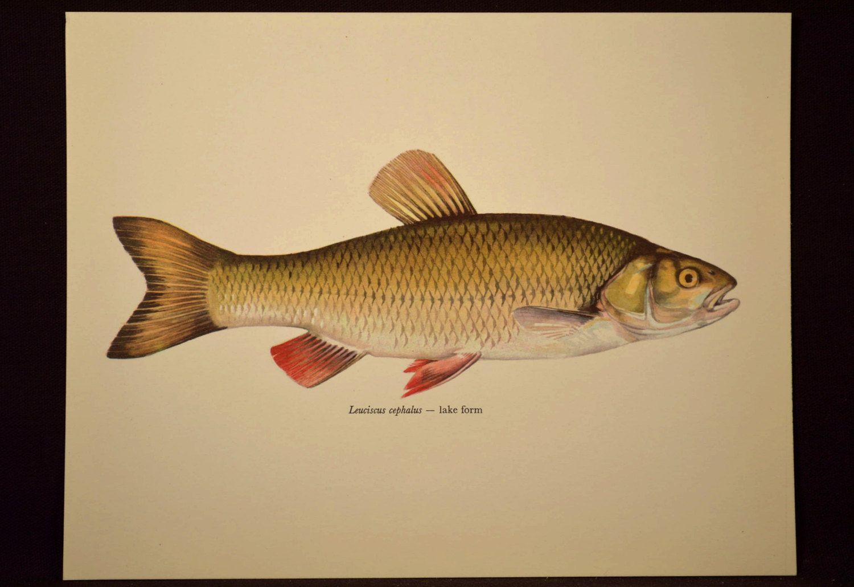 Fish Wall Art Cabin Wall Decor Fish Print Fishing Print | Nature ...