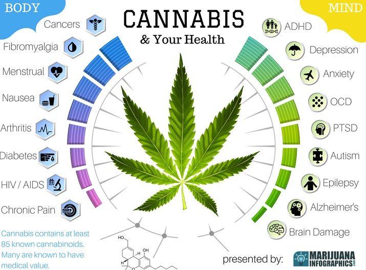 Image result for marijuana info