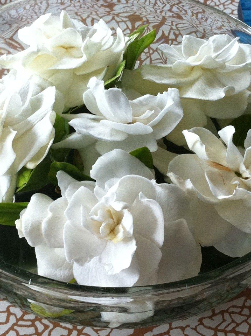 Gardenias Near Me : gardenias, Gardenias, Favorites, White, Flowers,, Flower, Decorations,, Gardenia