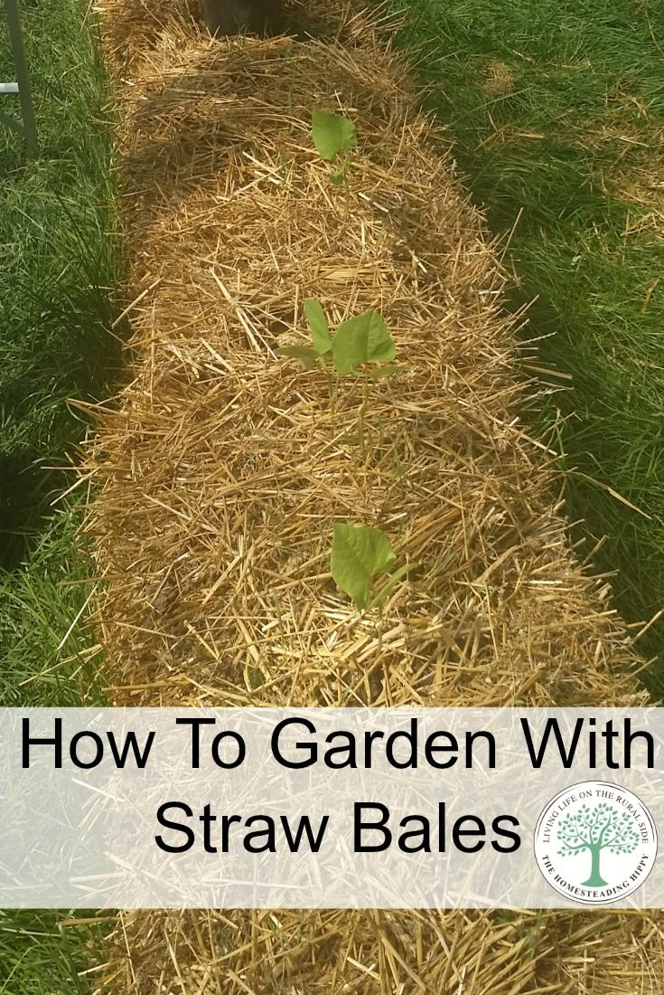 Learn how to get the best straw bale garden ever! | Straw bales ...