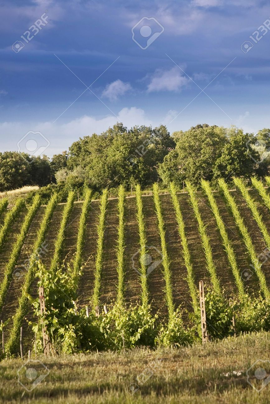 29557757 landscape of the tuscan hills and vineyards of chianti