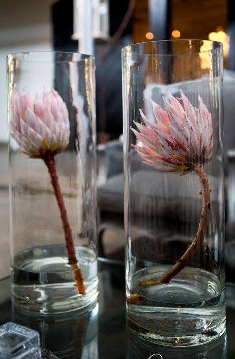 Protea single in glass flowers pinterest