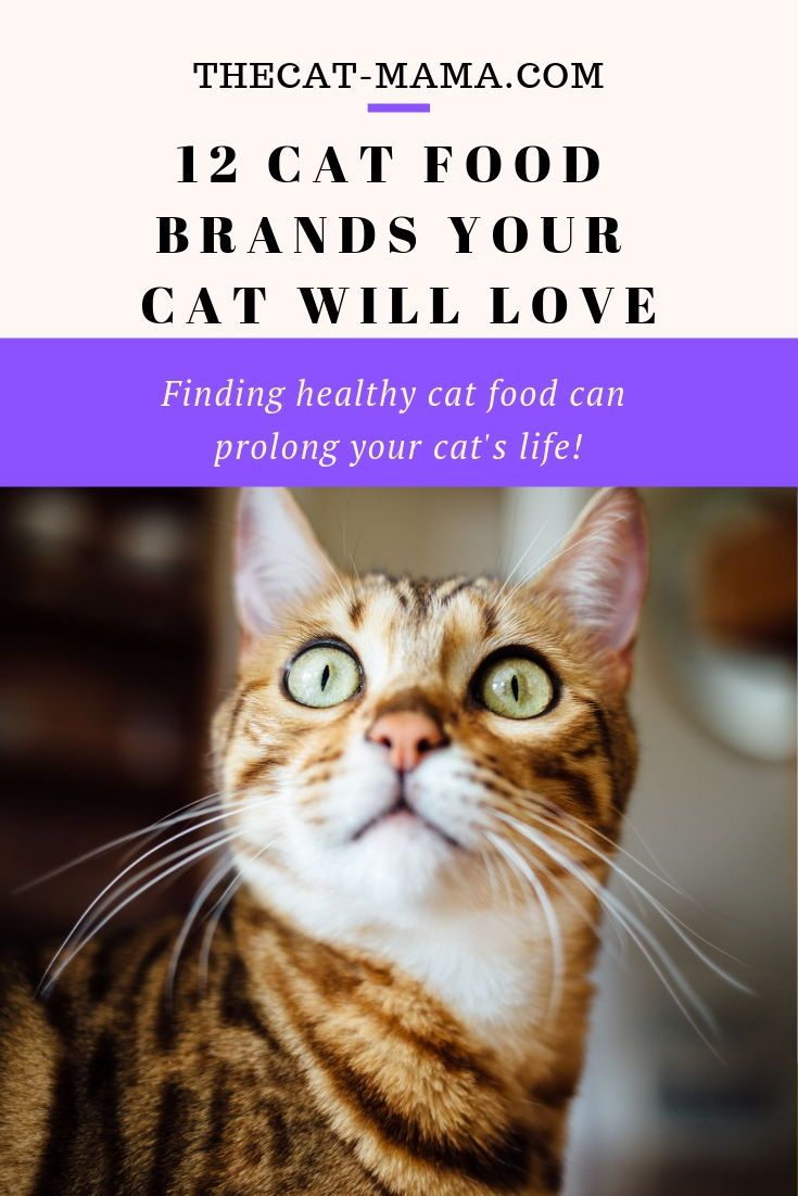 12 Best Dry Cat Food Brands To Buy For Your Cat Cat food