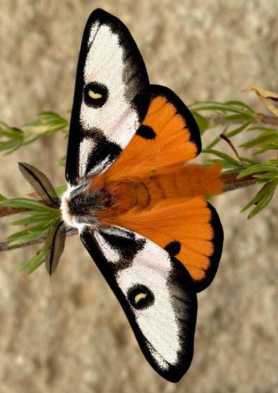 Pin Von Schleich Karin Auf Interesting Schmetterling Motte Tiere