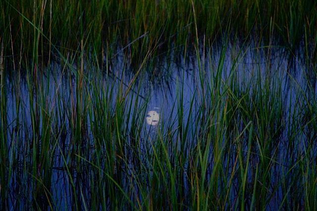 Moon reflected on   Accabonac Creek East Hampton,N.Y.  Photo:Lauren Loughin-Belhumeur