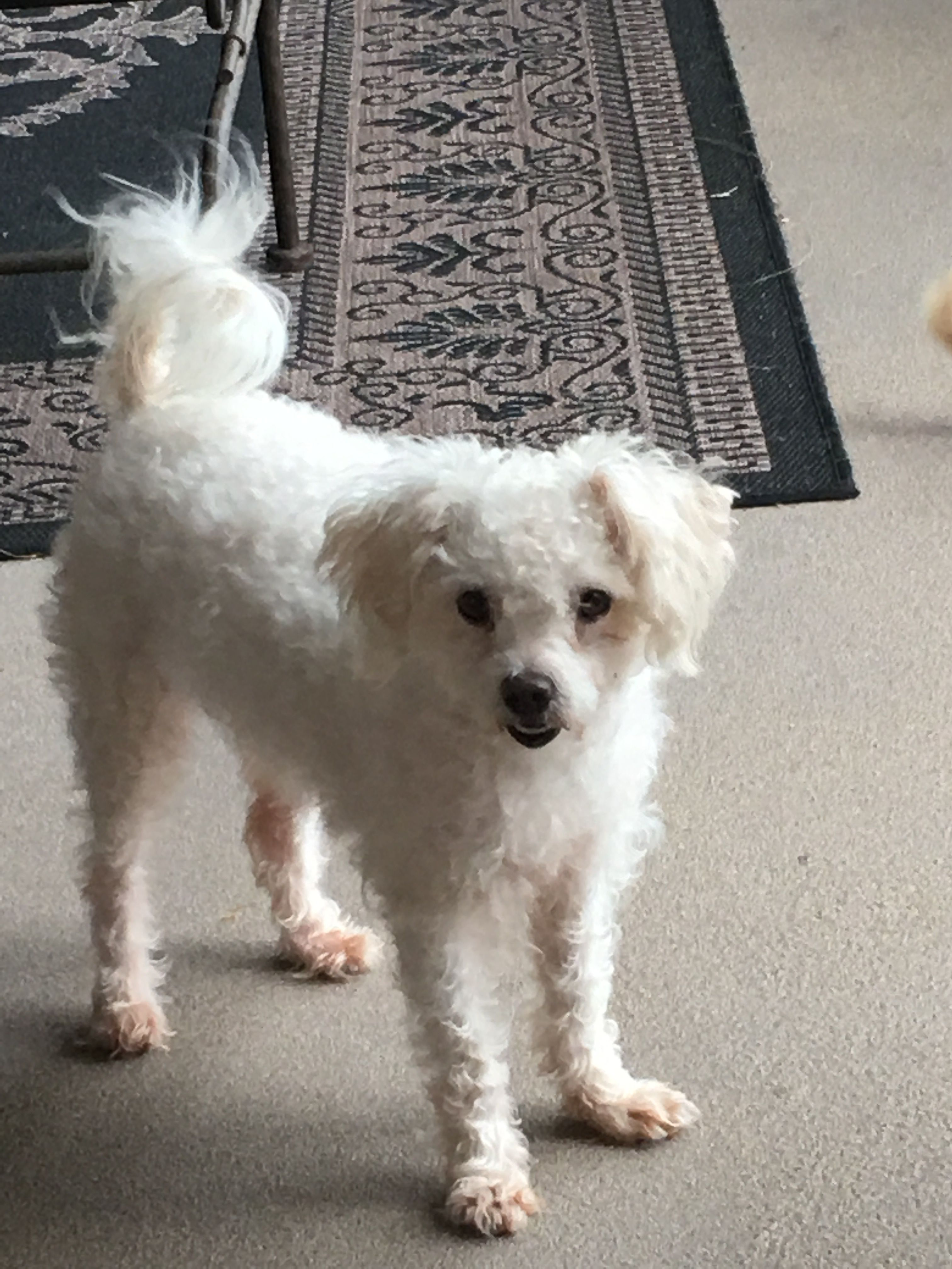 Adopt Meggie (Dallas, TX) on Petfinder Dog adoption