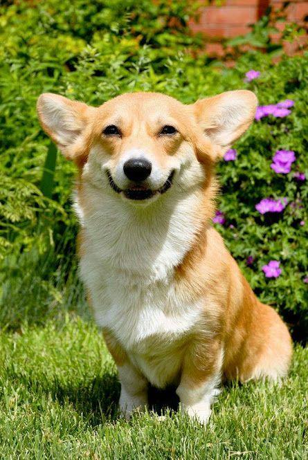 Nada melhor que começar o dia sorrindo para a vida!