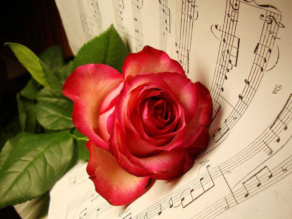 Red Rose And Sheet Music Desktop Wallpaper 1024x768 Phantom