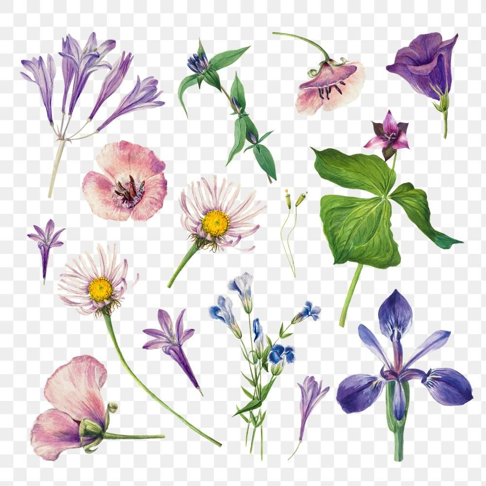 Purple Wild Flowers Png Illustration Hand Drawn Set Free Image By Rawpixel Com Hein Flower Illustration Flower Drawing Drawing Set