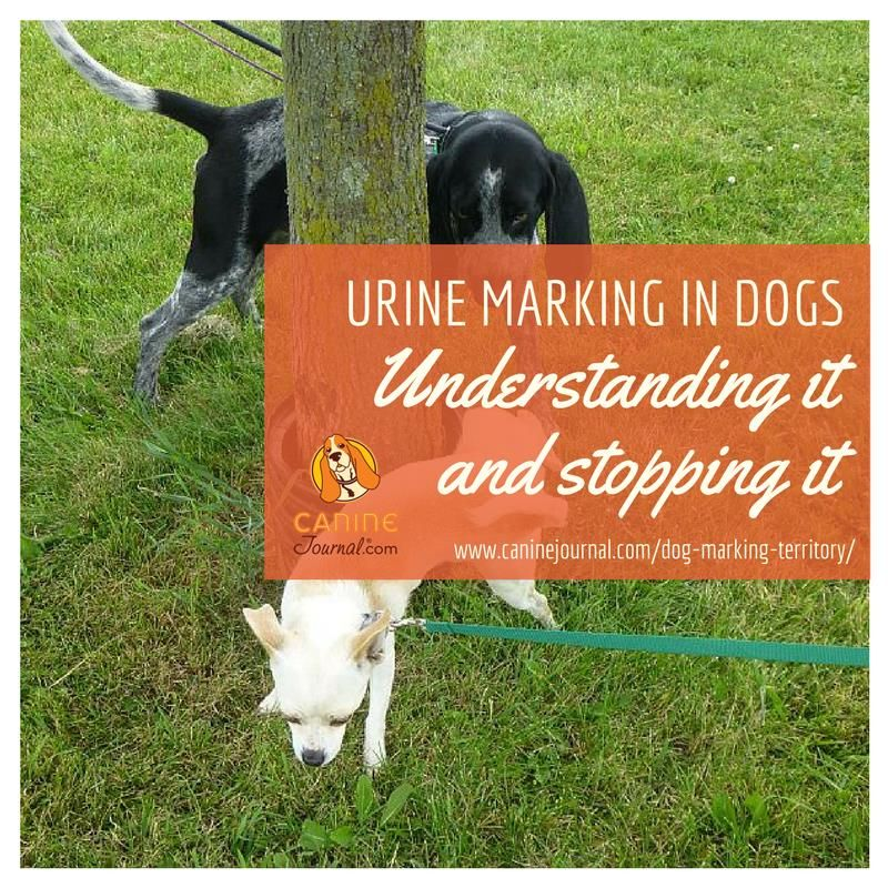 Why Do Dogs Mark Territory Dogs Dog Behavior Your Dog