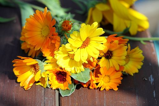 Growing Calendula From Seed Countryside Growing Herbs Outdoors Chamomile Plant Starting Seeds Indoors