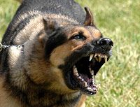 Veterinary Behaviorists Take a Stand Against Cesar Millan. Punishing Dog Aggression - Cesar Millan Controversy