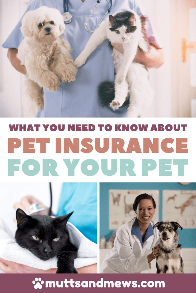 What You Need To Know About Pet Insurance For Your Pets Cheap Pet Insurance Pet Insurance Pet Health