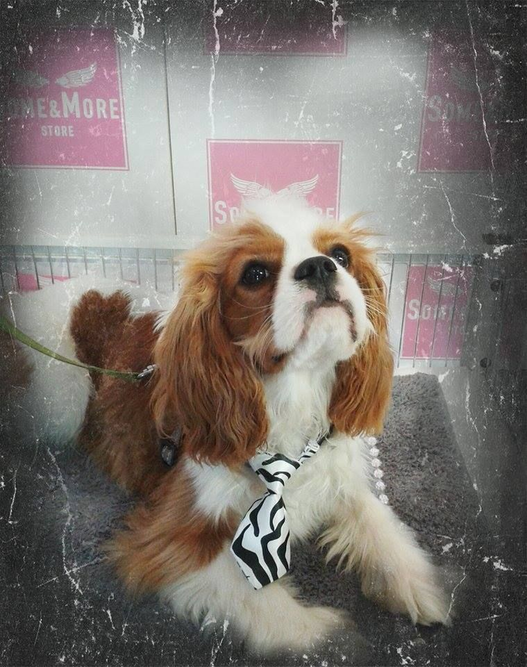 Ozzy!  Rusetit ja kravatit 4,90  www.somemore.fi
